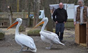 Nové prírastky v košickej Zoologickej záhrade